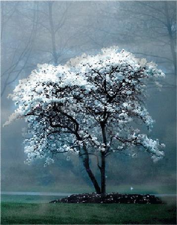Анимация Цветущее дерево с облетающими лепестками в туманное утро (© Angelique), добавлено: 11.03.2015 12:54