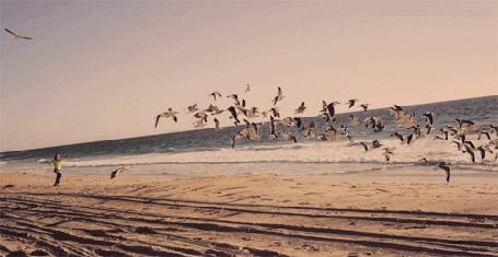 Анимация Девушка бежит по берегу моря, гоняя чаек