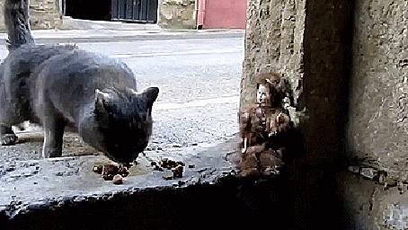 Анимация Кошка подходит к окну в подвал, чтобы поесть сухого корма, но увидев лежащую рядом куклу, поспешно ретируется (© Anatol), добавлено: 16.03.2015 16:13
