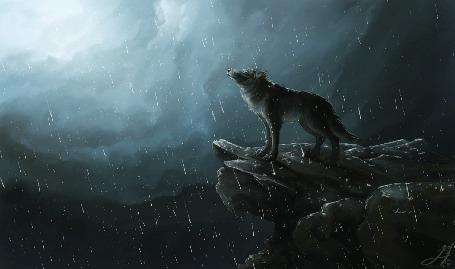 Анимация Волк в пасмурную погоду и дождь стоит на краю скалы (© Tiana), добавлено: 16.03.2015 16:34