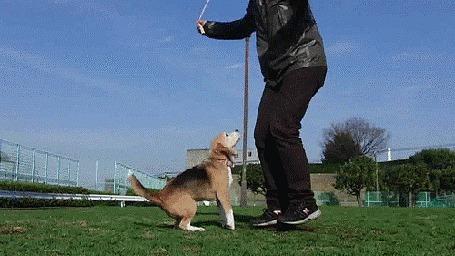 Анимация Мужчина прыгает через скакалку вместе с собакой