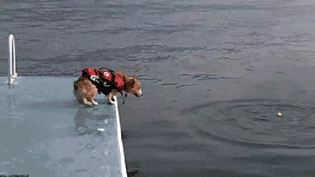 Анимация Собака смело прыгает с пристани в воду (© Anatol), добавлено: 17.03.2015 18:09