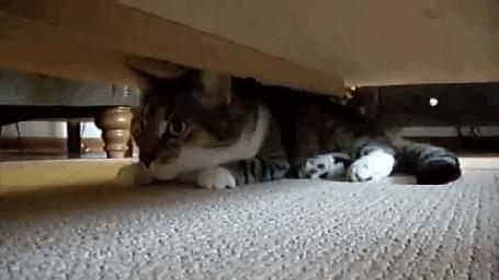 Анимация Кот спрятался под диван, но другой кот все же его нашел