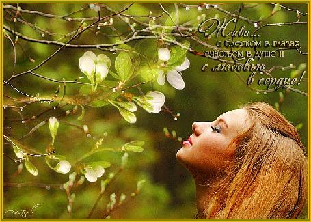 Анимация Девушка смотрит на распускающуюся ветку с цветами, рядом на ветках капли дождя, (Живи с блеском в глазах, счастьем в душе и любовью в сердце! )