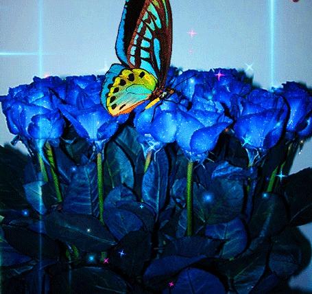 Анимация Бабочка сидит на синих розах и машет крылышками (© Akela), добавлено: 18.03.2015 22:21