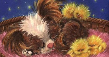 Анимация Лохматый пес и два желтых цыпленка спят в плетеной корзинке