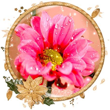 Анимация Розовая ромашка с каплями воды (© elenaiks), добавлено: 19.03.2015 14:37