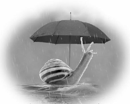 Анимация Улитка спряталась от дождя под раскрытым зонтиком (© Akela), добавлено: 20.03.2015 01:01