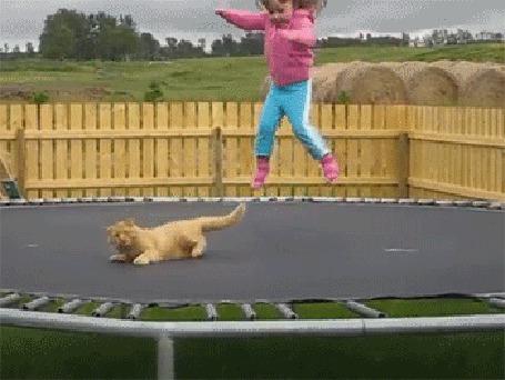 Анимация Девочка прыгает на батуте вместе с котом (© Anatol), добавлено: 20.03.2015 15:46