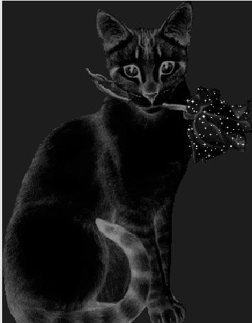 Анимация Черная кошка с черной розой в зубах