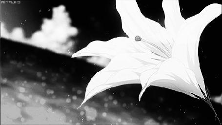 Анимация Цветок лилии на фоне природы (© zmeiy), добавлено: 23.03.2015 10:22