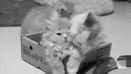 Анимация Котята играют в картонной коробке