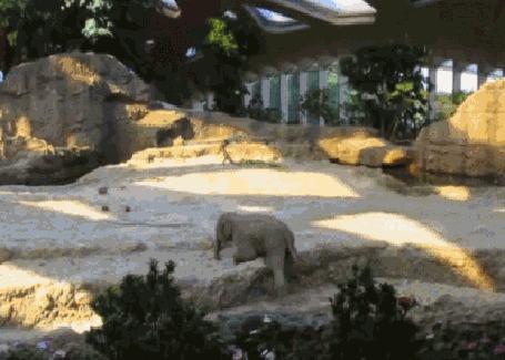 Анимация Слоны в зоопарке спасают попавшего в беду слоненка (© Anatol), добавлено: 23.03.2015 18:18