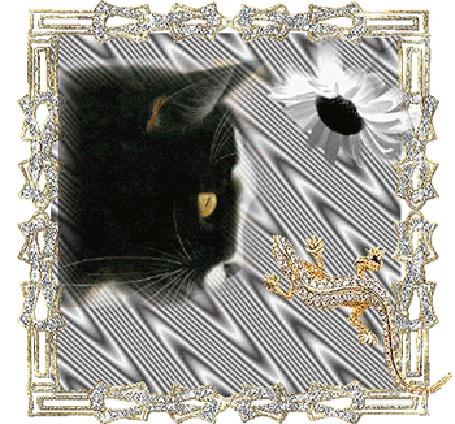 Анимация Черно белая кошка с ромашкой (© elenaiks), добавлено: 24.03.2015 08:03