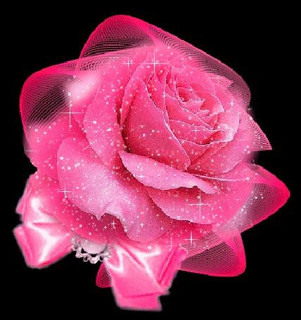 Анимация Розовая роза на черном фоне