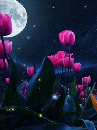 Анимация Голубые бабочки летят мимо розовых тюльпанов (© chucha), добавлено: 25.03.2015 00:44