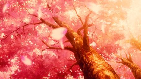 Анимация С сакуры облетают лепестки (© chucha), добавлено: 01.03.2015 01:27