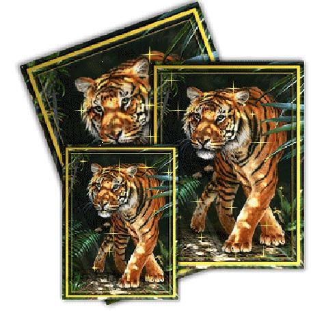 Анимация Три фотографии тигра (© elenaiks), добавлено: 01.04.2015 10:11