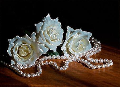 Анимация Три белых розы лежат на столе с бусами из белого жемчуга (© elenaiks), добавлено: 02.04.2015 11:40