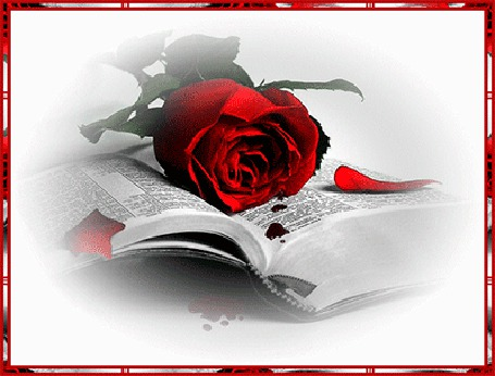 Анимация Красная роза лежащая на страницах раскрытой книги