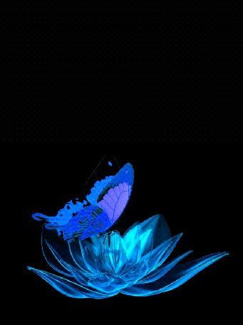 Анимация Порхающая голубая бабочка над вращающимся голубым цветком, на черном фоне