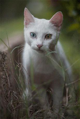 Анимация Белая кошка с расширяющимися и сужающимися глазами с разными зрачками, голубым и желтым (© Akela), добавлено: 02.04.2015 22:43