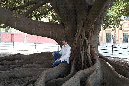 Анимация Мужчина в шляпе сидит под огромным деревом, которое постоянно меняет цвет своих веток, покадровая ретушь фотографии