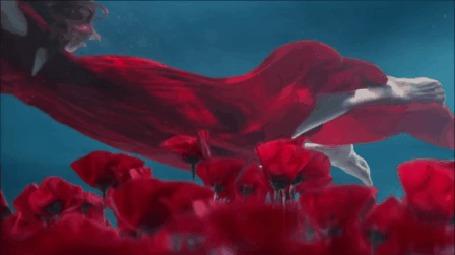 Анимация Девушка под водой срывает красный мак (© zmeiy), добавлено: 06.04.2015 18:46