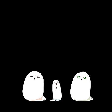 Анимация Три белых птицы танцуют на черном фоне (© Мася-тян), добавлено: 11.04.2015 01:41