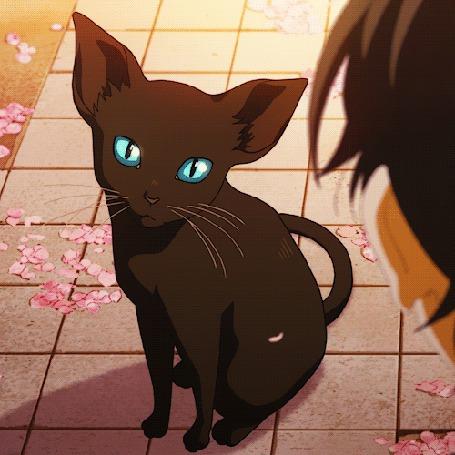 Анимация Синеглазый кот из аниме Shigatsu wa Kimi no Uso / Твоя апрельская ложь
