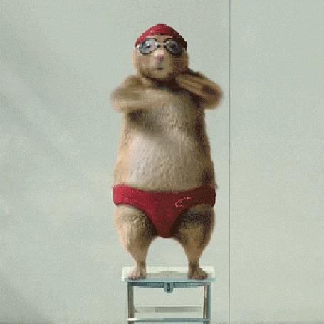 Анимация Хомяк смешно танцует на табуретке (© Anatol), добавлено: 13.04.2015 19:49