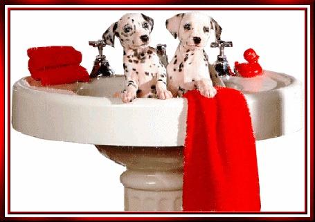 Анимация Два щенка далматина сидят в раковине (© elenaiks), добавлено: 14.04.2015 12:12