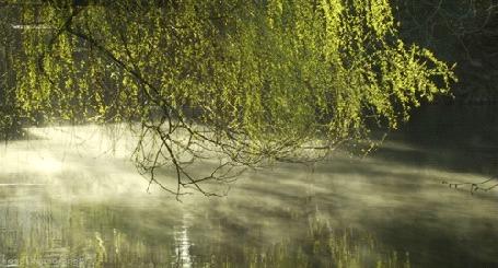 Анимация Ветви дерева склонились над водной гладью, по которой стелется дым