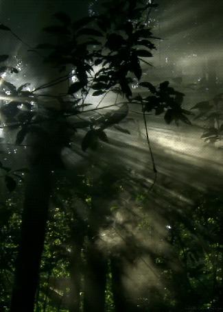 Анимация Сквозь лесные заросли проникают лучи солнца (© Solnushko), добавлено: 15.04.2015 12:39