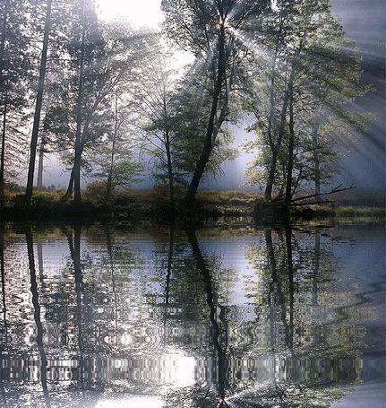 Анимация Лучи Солнца проникают сквозь кроны деревьев и освещают поверхность водоема (© Solnushko), добавлено: 15.04.2015 12:42