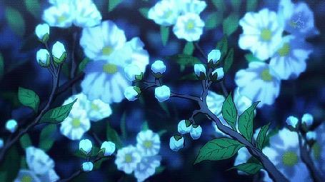 Анимация Бутоны превращаются в яркие цветы