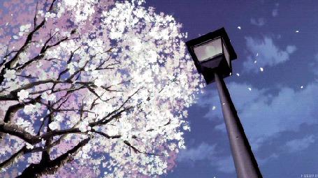 Анимация С сакуры облетают листья (© chucha), добавлено: 16.04.2015 12:19
