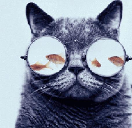 Анимация У кота в очках плавают рыбки (© Anatol), добавлено: 17.04.2015 00:23