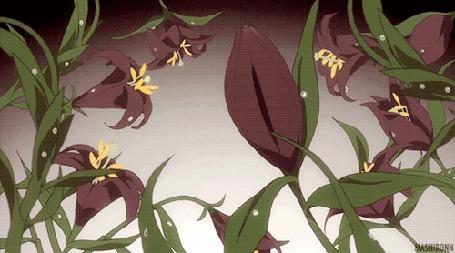 Анимация Расцветающая черная лилия (© Kuppuru), добавлено: 17.04.2015 07:22