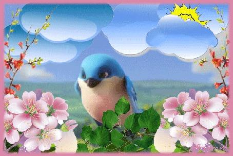 Анимация Между распустившимися розовыми цветами и зелеными листьями сидит птица с голубым оперением и поворачивает голову в сторону. За ней видны луг, облака и Солнце (© Solnushko), добавлено: 17.04.2015 10:17
