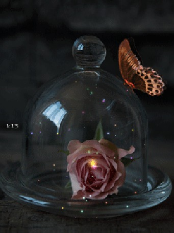 Анимация Бабочка сидит на стекляном куполе под которым лежит роза (© chucha), добавлено: 18.04.2015 00:22