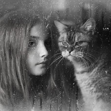 Анимация Девушка и полосатый кот за мокрым стеклом