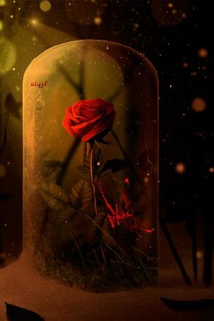 Анимация Красная роза и бабочка в банке (© zmeiy), добавлено: 18.04.2015 09:38
