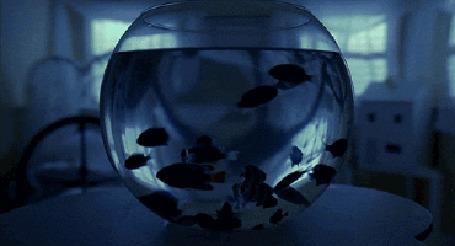 Анимация В комнате перемещается по кругу аквариум с рыбками (© Anatol), добавлено: 19.04.2015 01:04