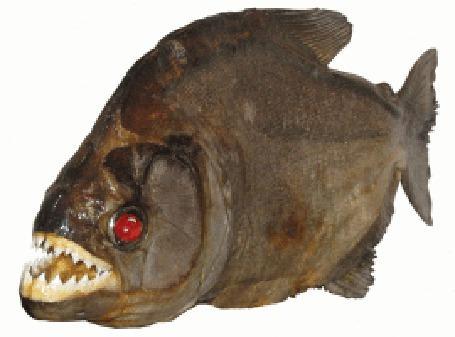 Анимация Хищная рыба с горящими красными глазами (© Anatol), добавлено: 19.04.2015 01:15