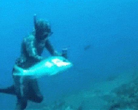 Анимация Огромная рыба нападает на дайвера и отнимает его добычу (© Anatol), добавлено: 19.04.2015 01:19