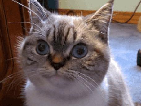 Анимация Одинаковое выражение лица у мужчины и кота (© Anatol), добавлено: 20.04.2015 00:32