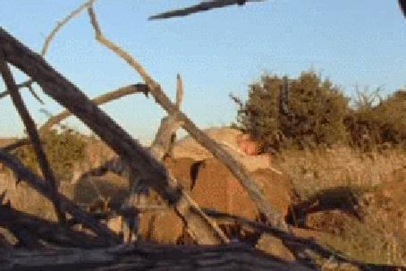 Анимация Тигр прыгает на спящего мужчину, облизывает его и идет дальше (© Anatol), добавлено: 20.04.2015 00:44