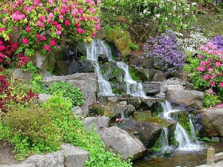 Анимация Вода бежит по камням, вокруг водопада много различных цветов (© Solnushko), добавлено: 20.04.2015 12:30
