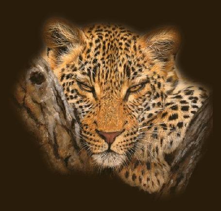 Анимация Леопард, положив морду между своей лапой и деревом, смотрит на нас, закрывая и открывая глаза (© Solnushko), добавлено: 20.04.2015 12:45